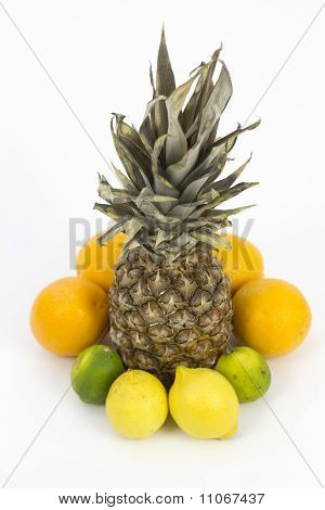Citrus Fruit Arrangement
