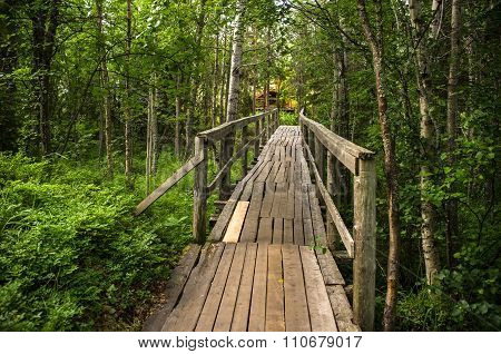 Old Bridge Through The Forest.