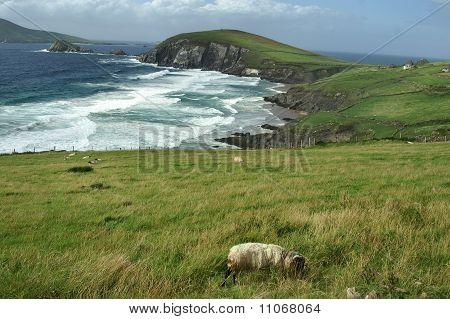 Shore Of Dingle Peninsula