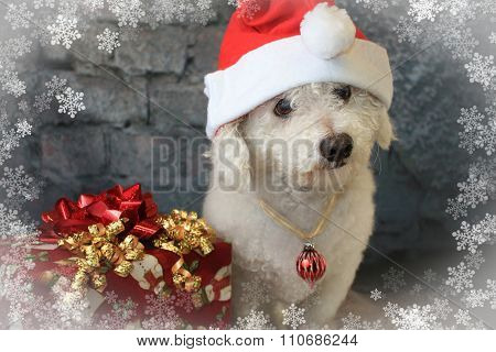 Bichon Frise Dog Wearing A Santa Hat