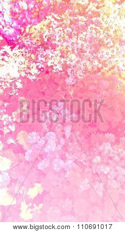 Flower Bloom Plant Shine Sweet Colorful Sunshine Beautiful In Garden Country Background With Colorfu