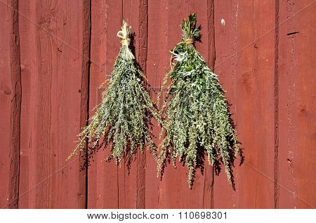Bundles Of Fresh Herbs Hanged To Dry  On Wooden Wall