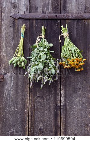 Bundles Of Medical Herbs Hanged On Antique  Ranch Door
