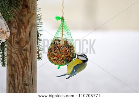 The Eurasian Blue Tit bird (Parus Caeruleus, Blaumeise) perching on a meshed bag full of nut with snow covering during the Winter in Europe