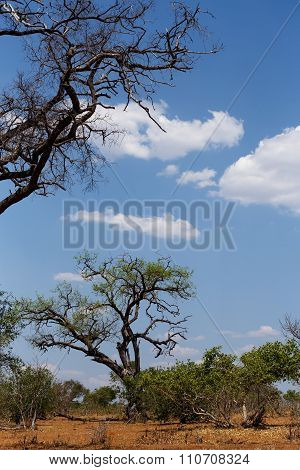 Wild African Landscape, Chobe National Park