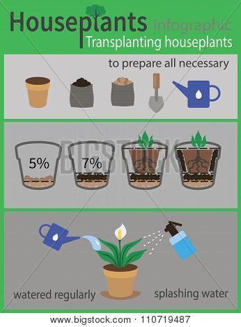 Transplanting houseplants infographics