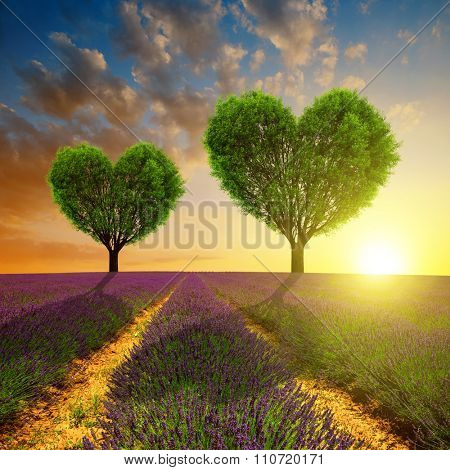 Lavender fields with trees in the shape of heart at sunset. Valentines day.