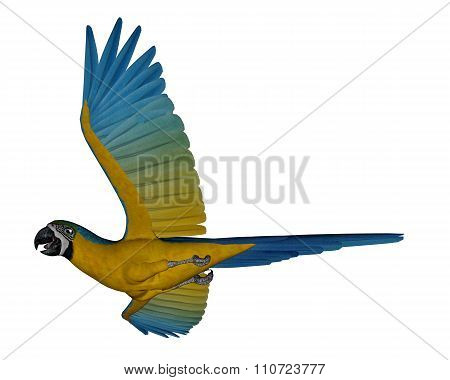 Blue and yellow macaw, parrot, flying - 3D render