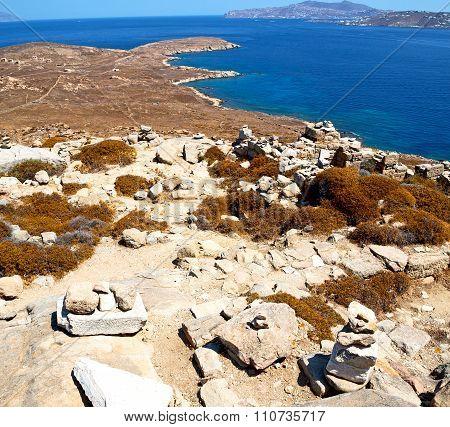 Plant  In Delos Greece The Historycal Acropolis And Old Ruin Site