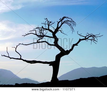 Old Dead Tree Silhoutte
