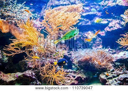 Vivid Colorful Coral Colony Reef And Tropical Fish In The Ocean