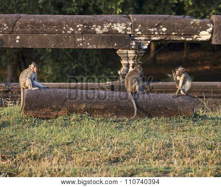 Three monkeys portrait