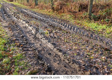 Muddy Path Through The Forest With Wheel Tracks