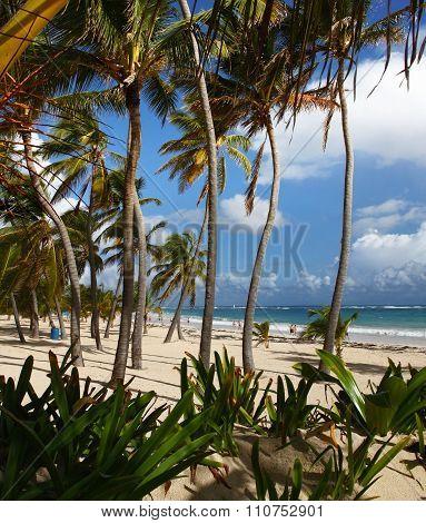 Beach in Punta Cana