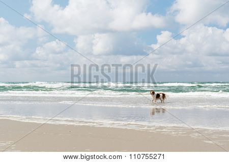 Dog swimming and playing in the sea