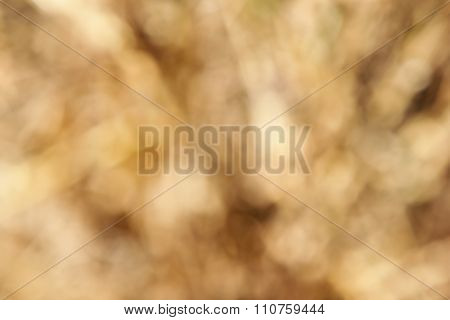 Abstract Blur Poaceae Texture Background
