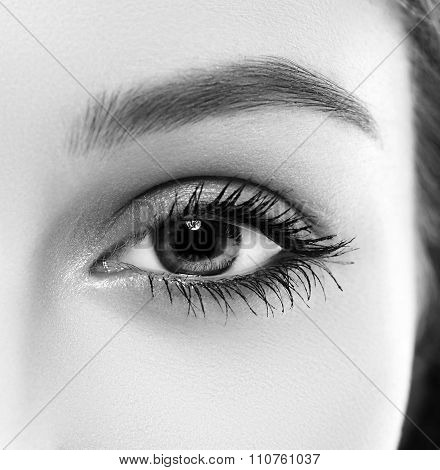 Eye Woman Eyebrow Eyes Lashes Black And White