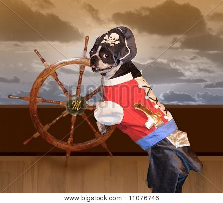 Boston Terrier Pirate