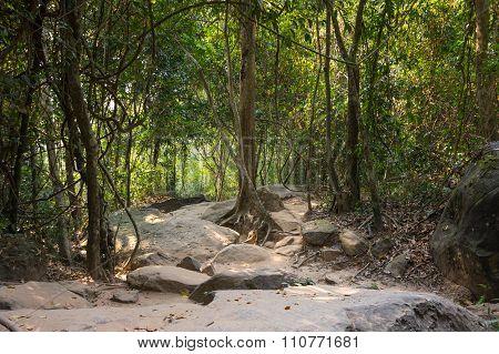 Rainforest In Cambodia