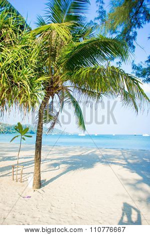 coconut tree on the huahin beach