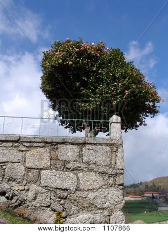 Árvore e a parede de pedra
