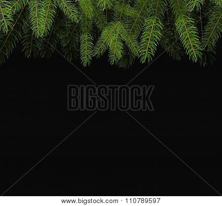 Fresh Green Fir Branch Close Up Isolated On Black Background