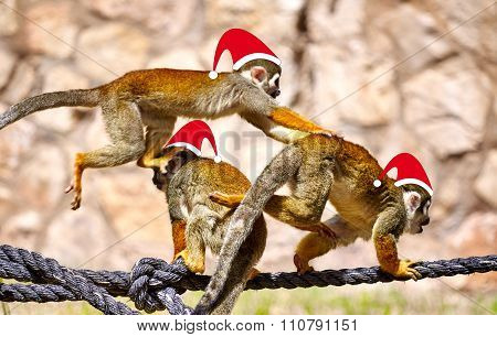 Monkeys In Christmas Santa Hats Playing On The Rope