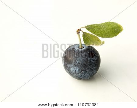 Sloe,prunus Spinosa - Blackthorn On A White Background