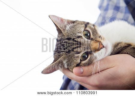 Owner hands holding a cat