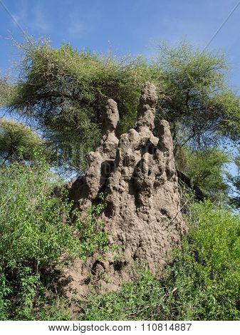 Termite mound in Serengeti National Park,