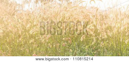 Selective Focus Of  Gress Flowers In The Field With Sun Light Effect, Vintage Toning Color