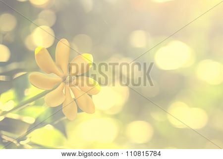 Selective Focus Of  Yellow Flowers  In The Field,vintage Toning