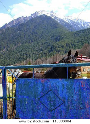beautiful horse on a background of mountains