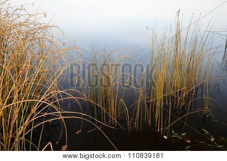 Coastal Plants In Late Autumn