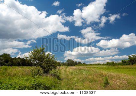 Landscape Of Village