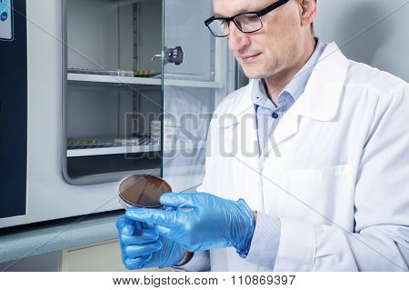 Microbiologist Hand Cultivating A Petri Dish Whit Inoculation Loops, Beside Autoclave.