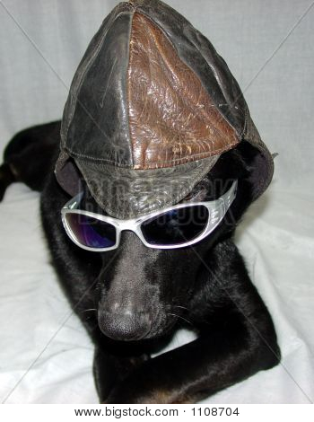 Funny Dog Hat Glasses