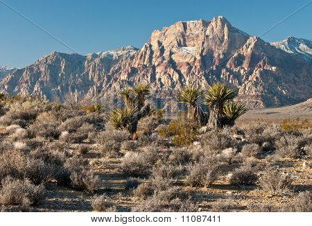 Red Rock Canyon Morning