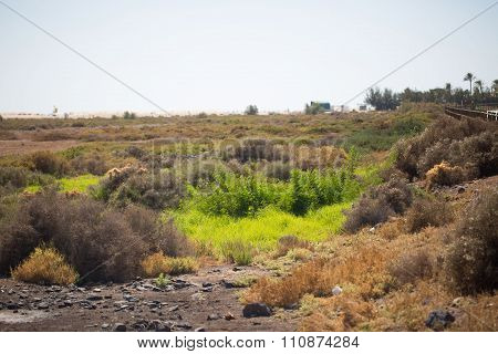 Nature reserve on fuerteventura, spain