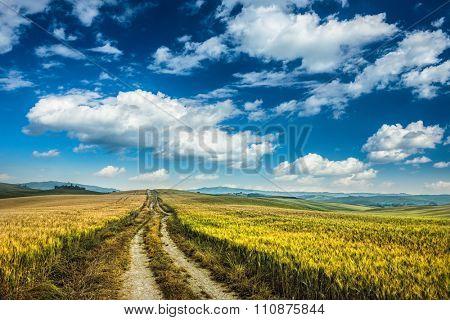 blue sky and dirt road in wheaten field