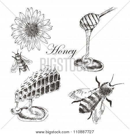 vector honey, honeycells, honeystick, bee illustration. detailed hand drawn sketch of nature objects