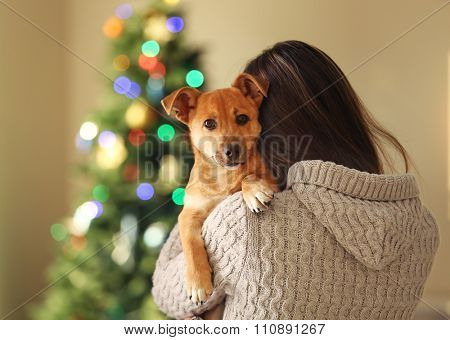 Small funny cute dog at woman shoulder on blurred Christmas background