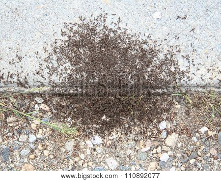 image from outdoor background series (sugar ants)
