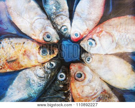 image from animal background series (fish)