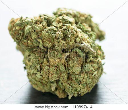 Sweet Green Bud