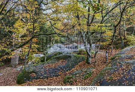 Autumn Scene In Fontainebleau Forest