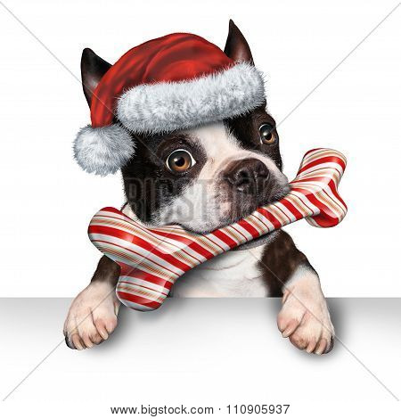 Christmas Holiday Dog