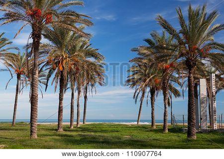 Alboraya (Alboraia) Seafront, Valencia, Spain
