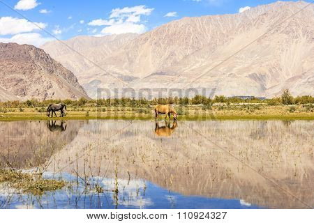 Horse on pond