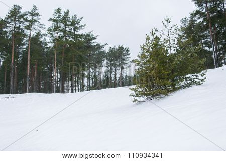nature, season and environment concept - winter spruce forest and snow cowered field